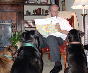 Lew Reading a Book to Two Labrador Retrievers and a Boxer