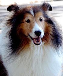 Sam's Hope - Veterinary Care Grant Recipients